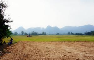 thai-rice-farmers