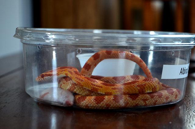 nevada-snake